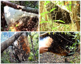 Bạn muốn mua Mật ong rừng nguyên chất 100%?