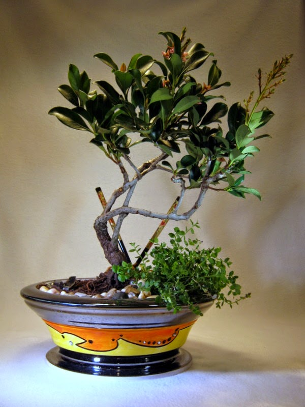 Handmade Ceramic Bonsai Pots By Matthew Kennedy