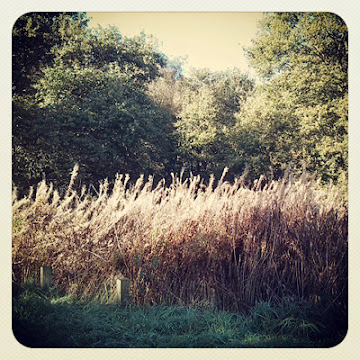 dirty blog - instagram - Stuart Pilkington
