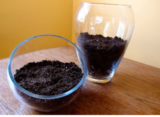 como hacer terrarios