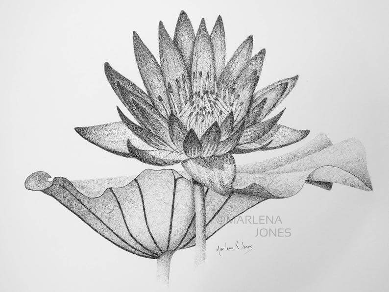 04-Water-Lily-Marlena-Jones-www-designstack-co