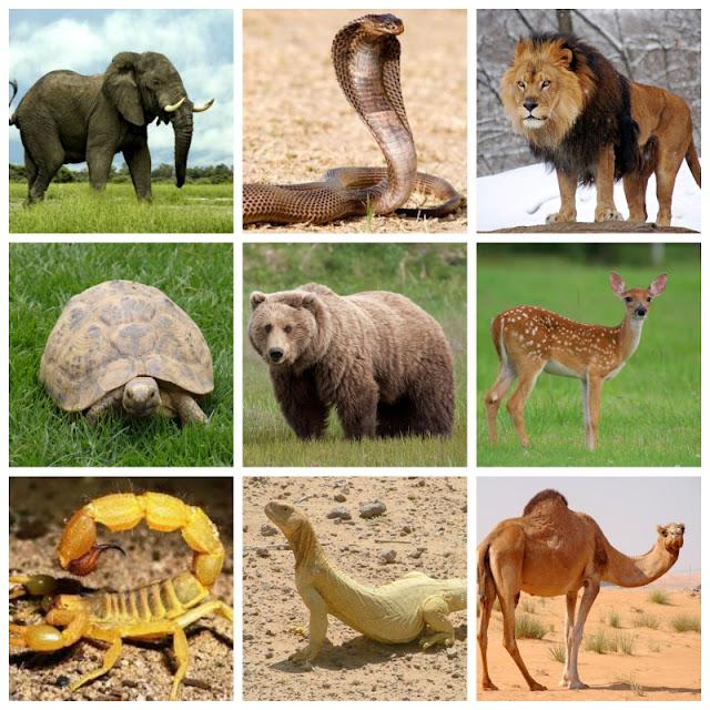 الحيوانات البرية منافعها ومضارها