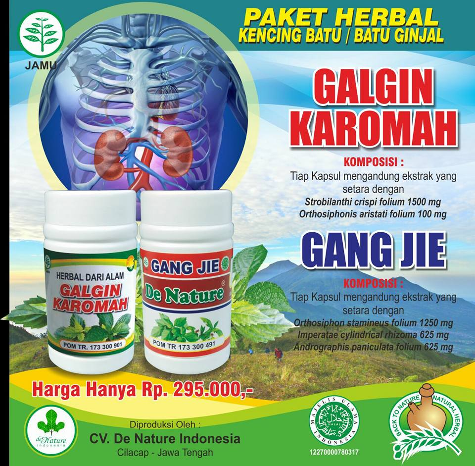 Obat Herbal Buat Batu Ginjal