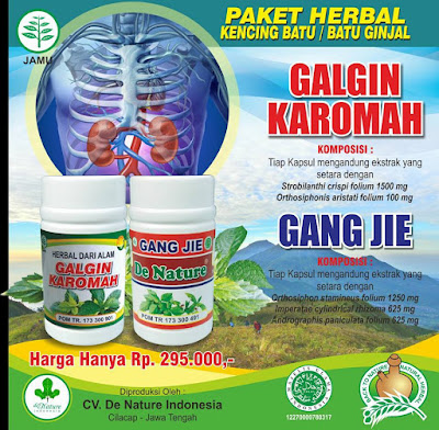 obat alami penyembuh ginjal
