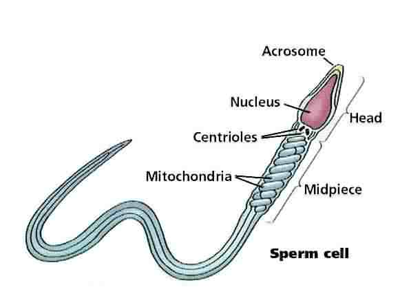 How that picture of sperm labeled you