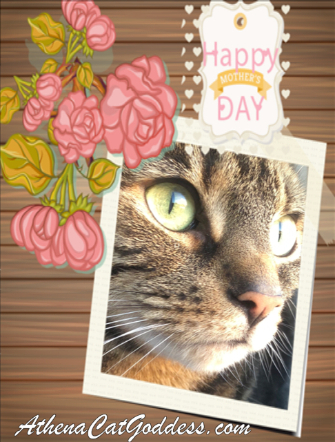 Mother's Day Caturday Art Card