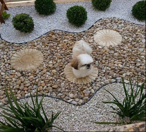Do you want to design your garden without spending too much ? Rock garden design is the right choice. Stones can be found everywhere, so you won't need to spend money to get them. All you need to do is to plant beautiful and colorful plants and arrange them according to your design.
