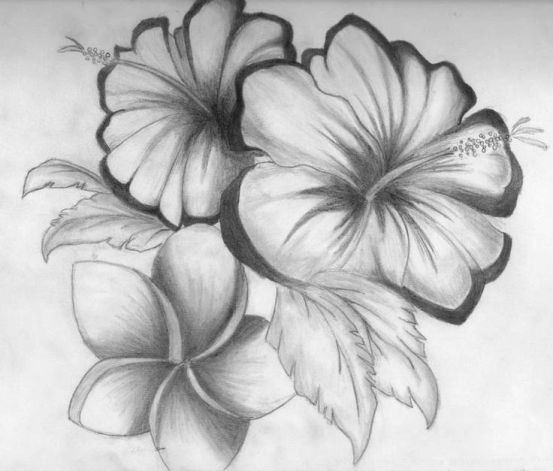 Pretty Pictures Of Flowers To Draw