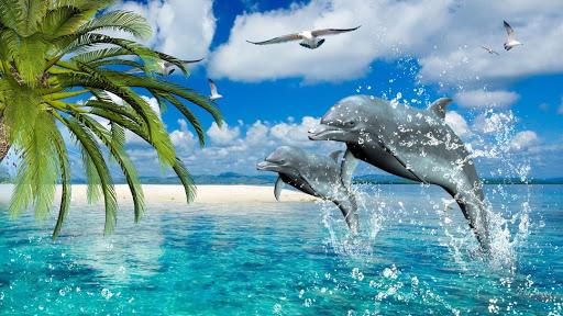 Удивительные способности дельфинов