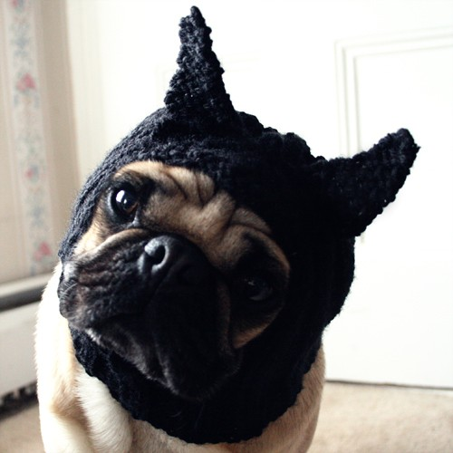 Catsparella: Black Cat Hat for Dogs