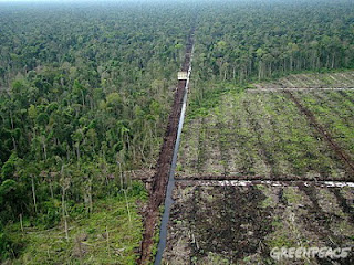 Increasing Oil Palm Production Degraded Soils