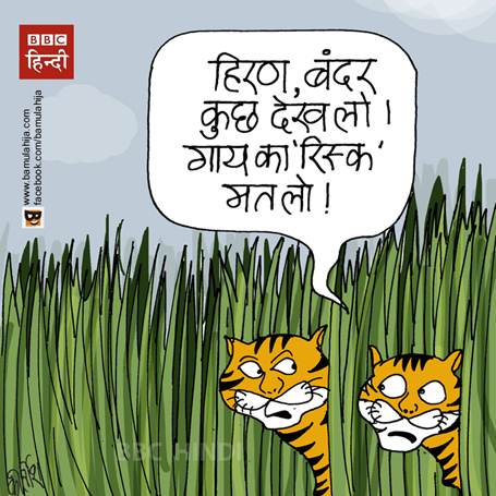save tiger cartoon, beef ban, cartoons on politics, hindutva, indian political cartoon