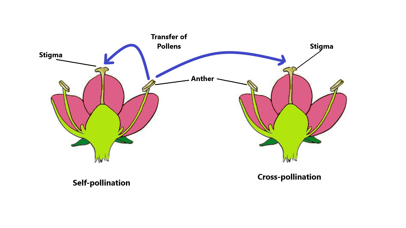 Class 7 Science Chapter 12 Reproduction In Plants