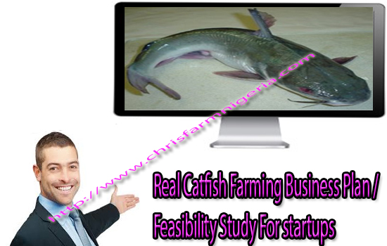 Catfish Cultural System and Management / Business Plans