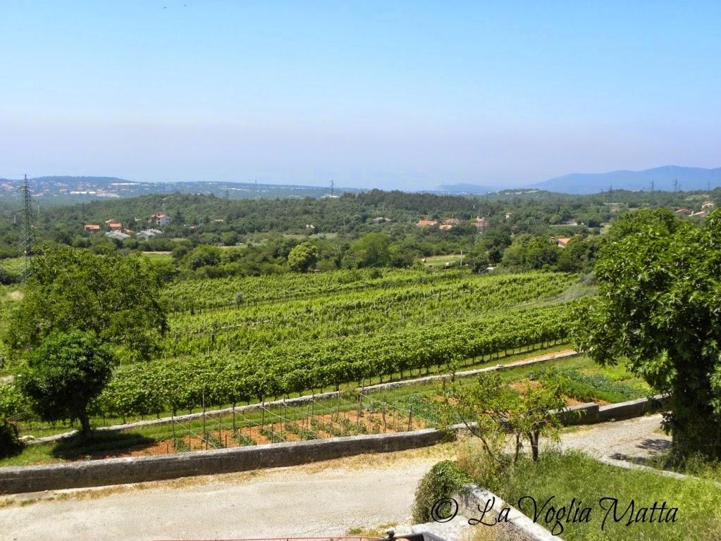 Azienda Beniamino Zidarich a Prepotto Trieste  panorama