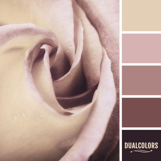 color_paleta_36