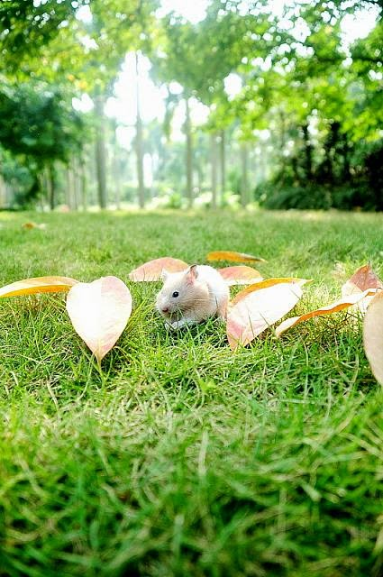 Cute and funny pictures of hamsters 2-8