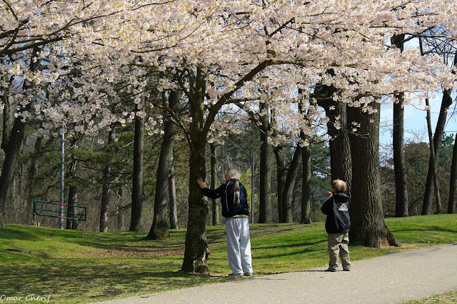 Cherry Blossom week in High Park, Toronto - 2011
