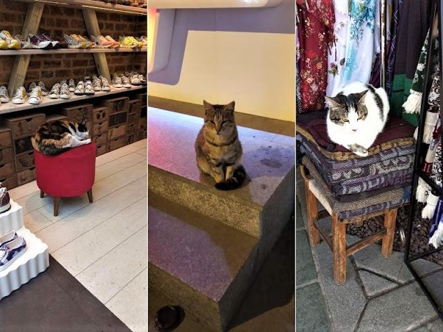 i gatti coccolati nei negozi di istanbul