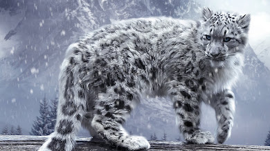 White King. Snow Leopard