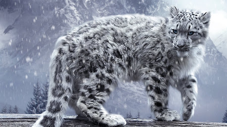 White King. The Snow Leopard 1920x1080 HD