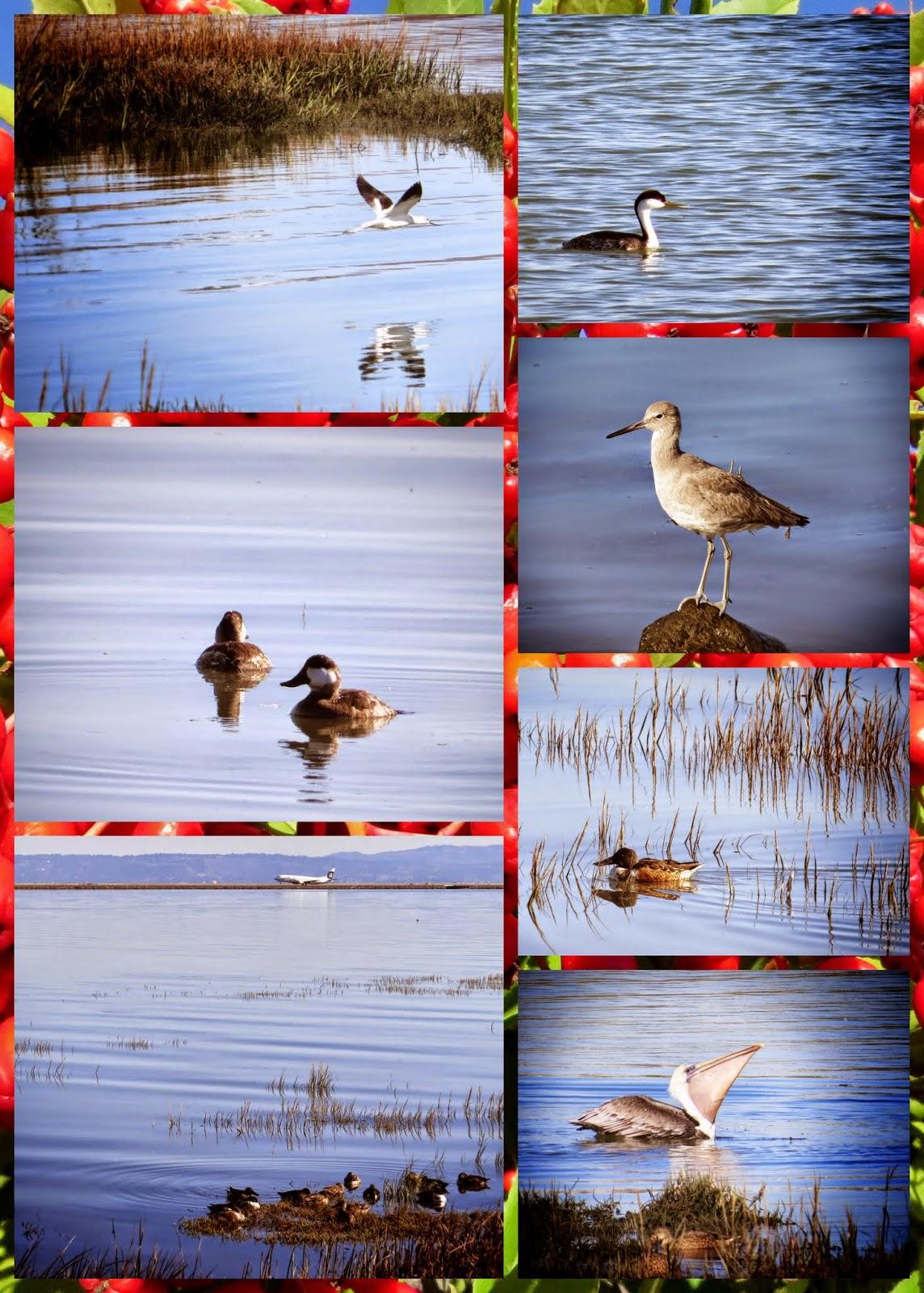 Birds of Bayfront Park