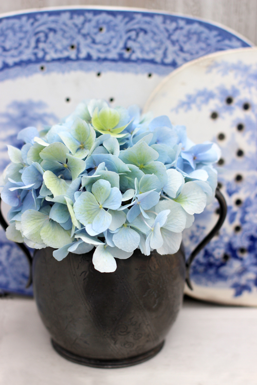 pale blue hydrangea and gravy drainers