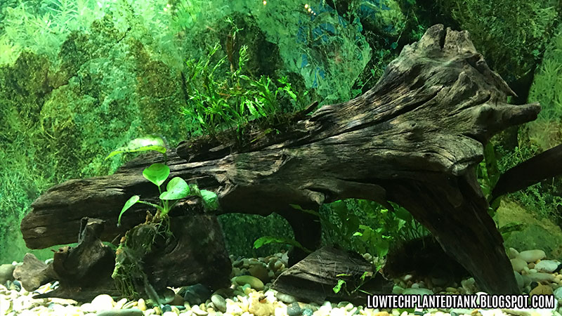 KLCC Aquaria Tropical Tank