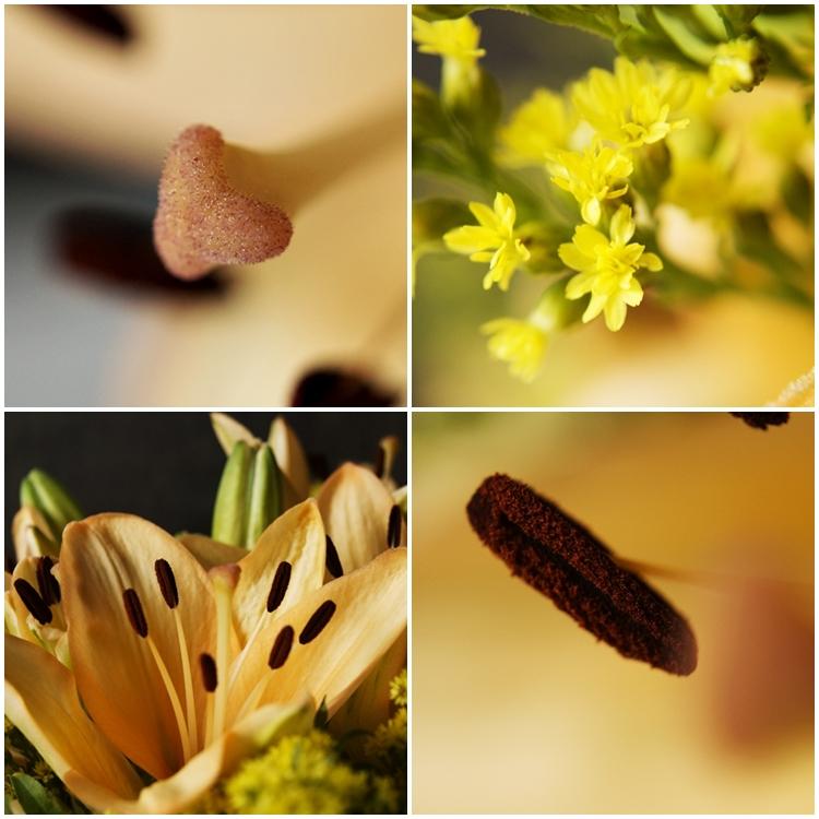 Blog & Fotografie by it's me! - Collage von Nahaufnahmen einer lachsfarbenen Lilie und Goldrute