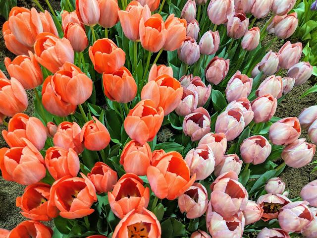 Квіткова виставка у Філадельфії - 2018 (PHS Philadelphia Flower Show -2018)