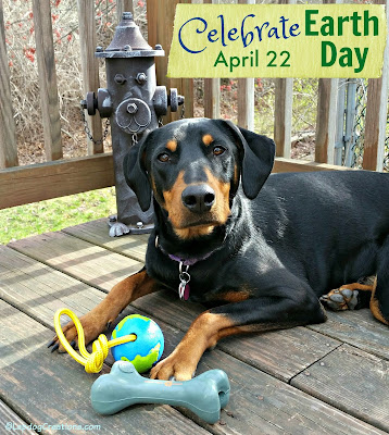 doberman mix rescue planet dog toys