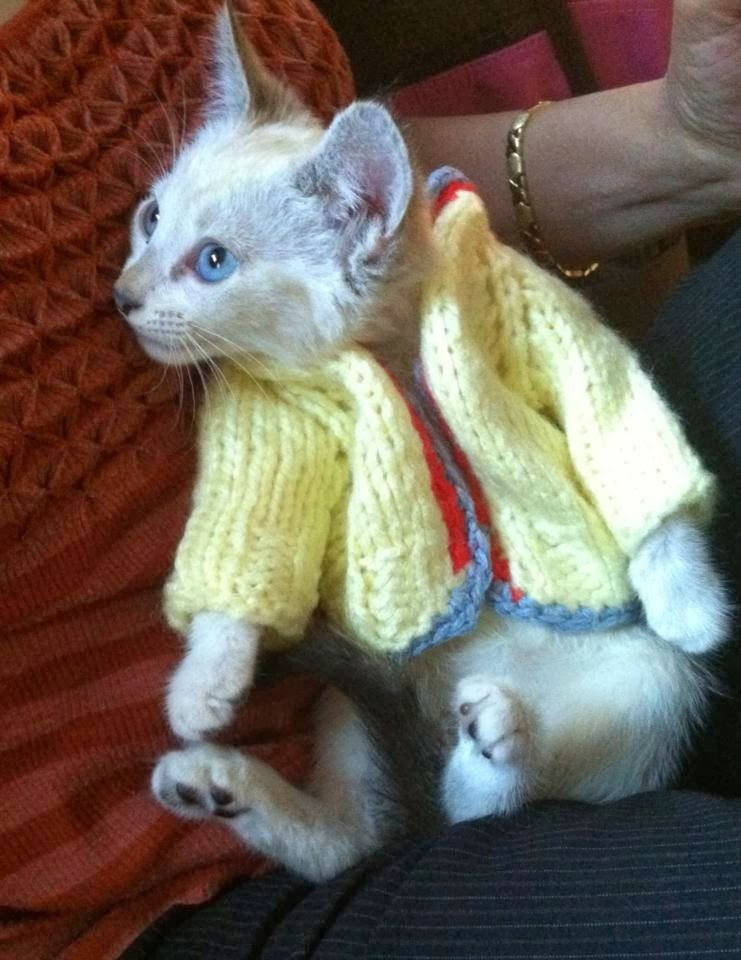 Funny cats - part 90 (40 pics + 10 gifs), kitten wearing wool sweater