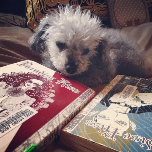 Murchie lies curled on a bronze comforter. His head is raised, but his ears are down. He looks sad. Two paperback volumes of Paradise Kiss form a right angle around him. One features a dark-haired Japanese girl in a bolero. The other features a blonde Japanese boy with a lot of facial piercings.