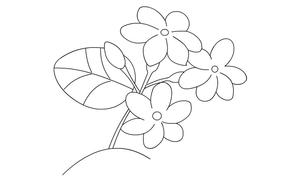 Gambar Mewarnai Bunga Mataharimawartulipmelati Gambar Mewarnai
