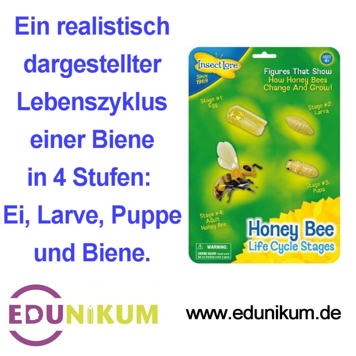 Edunikum: Lebenszyklus einer Biene in 4 Stufen: Ei, Larve, Puppe und ...