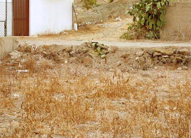 Imagen de Test Visual: Encuentra al gato camuflado como verdadero ninja 10