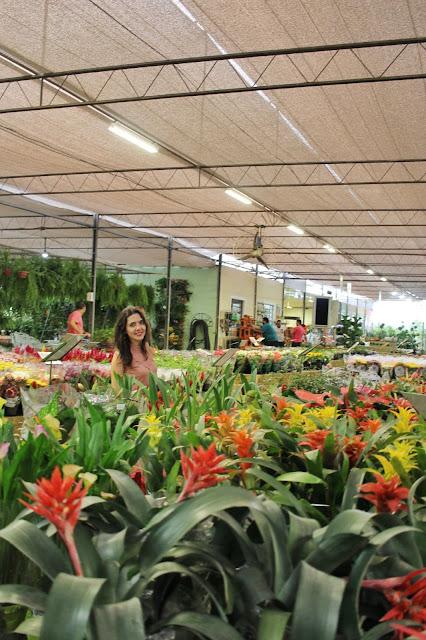 Flores no Garden Center, em Holambra, São Paulo.