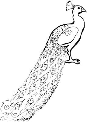Gambar Mewarnai Burung Merak - 4