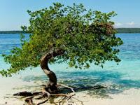 Pantai Gatra Malang, Keindahan Ala Raja Ampat