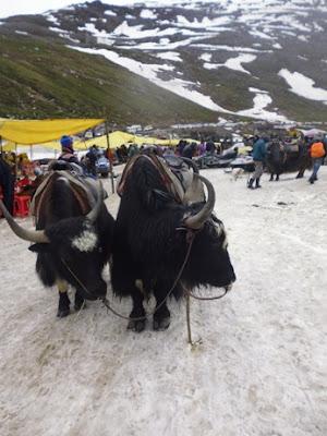 Hewan pegunungan Himalaya