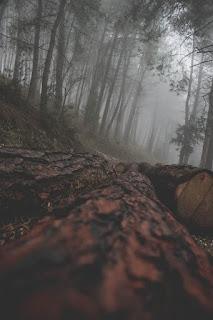 Έκθεση φωτογραφίας των Πέγκα Πολυχρόνη και Τσιλίκη Νικόλαου