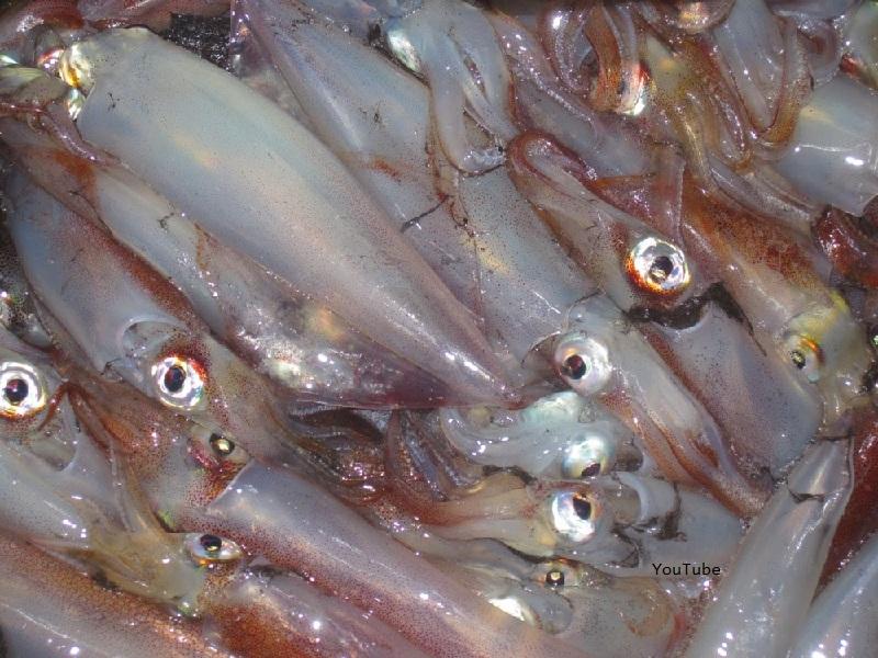 Makanan Kesukaan Ikan Lele Jenis Ikan Kecil