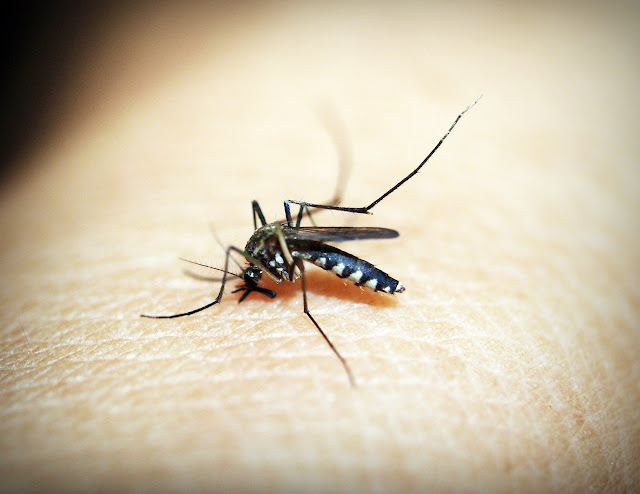 Malaria - Symptoms, Prevention & Treatment | Health Tips