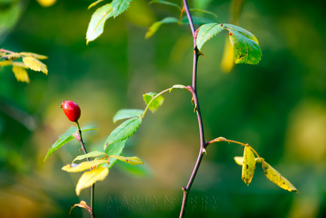 Autumn at Monks Wood with this close up shot of a vibrant red berry