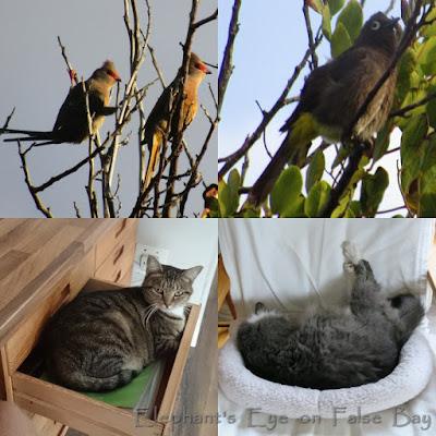 Garden birds and cats