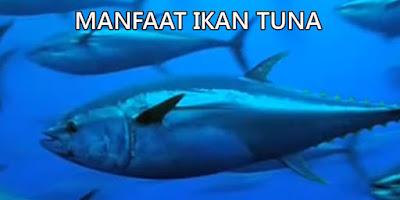 manfaat ikan tuna