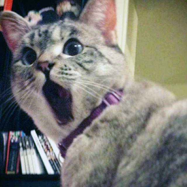 Nala, The Shocked Cat-1