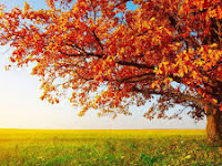 Yuk, Suburkan Pohon Cinta yang Mulai Layu