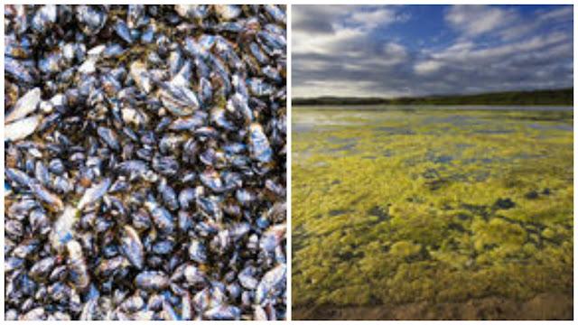 Em Delmiro Gouveia, técnicos e especialistas discutiram  combate ao mexilhão e algas no Rio São Francisco