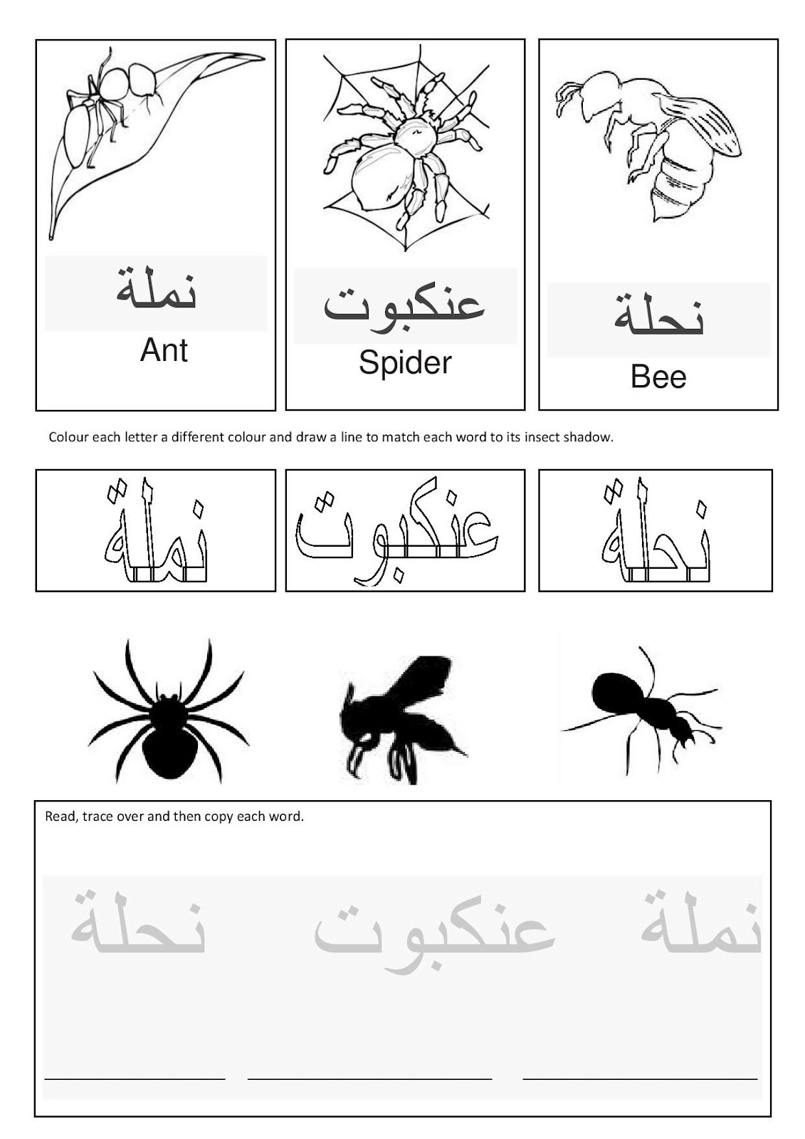 A Muslim Homeschool Arabic Insects